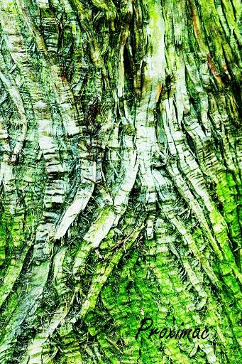 wood tree 1